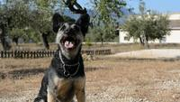 Glad hund hämtar bollen
