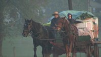 Amish farmer couple riding buggy