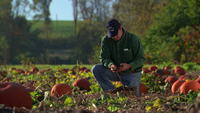 Farmer checks out soil in pumpkin patch