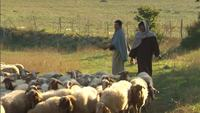 Shepherds herding sheep in Matera Italy