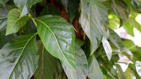 Folhas verdes.