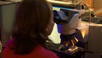 Woman scientist on microscope in lab