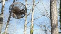 Rustic-scene-wire-globe-hanging-on-a-tree-in-the-country