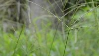 Flou d'herbe