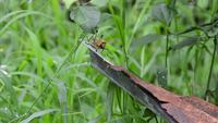Färgglad gräshoppa