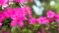 Vibrierende Blume
