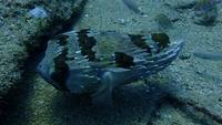 Pedra peixe