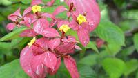Flores cor-de-rosa e amarelas
