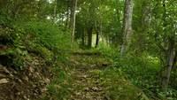 Caminhando ao longo de uma estrada de floresta clara
