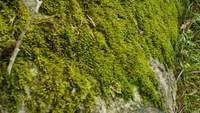 Moss on a rock on a hillside
