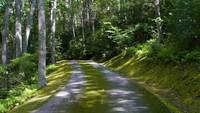 Moss covered road