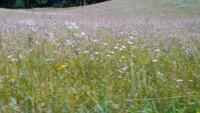 Ett fält täckt med vildblommor