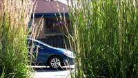 cars passing between plants and a house