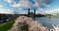 Portland Oregon Cherry Blossoms Park And River Bridge 4K Aerial Drone Shot