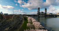 Aerial Drone Shot of Oregon Cherry Blossoms Park And River Bridge