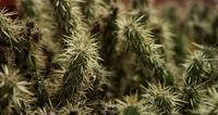 Foco estático focado em vários planos de plantas espinhosas