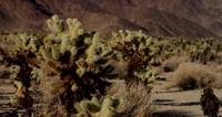 Static shot focusing several planes of mountainous landscape with spiny plants in 4K