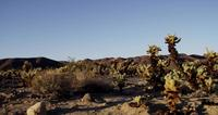 Plano de viaje de ladscape montañoso con plantas espinosas en 4K