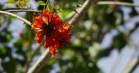 Beautiful-orange-flowers-moving-in-windy-and-clear-day-in-4k