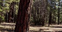 Verticaal panning schot van boomstam met magisch bos op achtergrond in 4K
