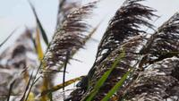 Close up of palm branches moving slowly by the wind in 4K
