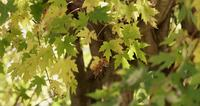 Nature textue of yellow and green leaves with defocused foreground and background in 4K