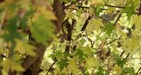 Natural focused and defocused planes withy branches and leaves in 4K