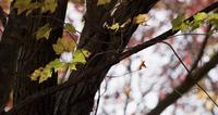 Låg vinkelskott av skogsträd med få gula löv i 4K