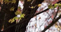 Lage hoek die van bosboom met weinig gele bladeren in 4K is ontsproten