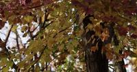 Several tree branches in autumn with yellow and brown leaves in 4k