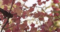 Extreme  close up of pink and red leaves moved by the wind on blurred sky background in 4K