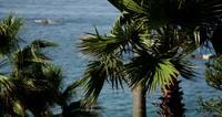 Het filteren van schot van palmen die zich langzaam met vage overzeese achtergrond in 4K bewegen