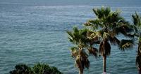 Tir lent allant à gauche des palmiers avec le fond de la mer en 4K