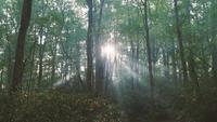 Sun-shining-rays-of-light-through-the-trees-in-the-forest-free-stock-footage