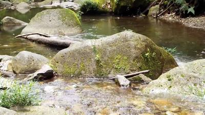 Big Rocks with Moss In The River