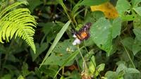 Little Black And Orange Butterfly Drinking Nectar