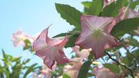 Galhos De árvores Com Várias Flores Rosa