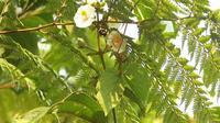 Bumblebee bebendo néctar