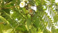 Bumblebee trinkender Nektar