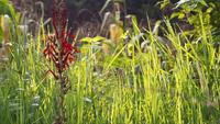 Red Flowers With Tall Grass In Background