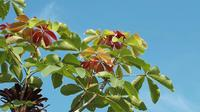 Red Orange And Green Leaves With blue Sky in Background