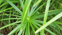 Plantas que crescem em espiral