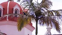 Bird In Palm With Church Dome em fundo