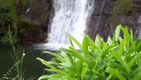 Waterfall With Green Plants In Foreground