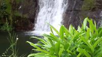 Vattenfall med gröna växter i förgrunden