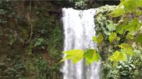 Blurred Waterfall And Leaves In Foreground