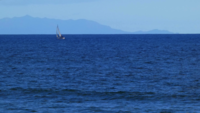 Sailboat in Ocean 4K