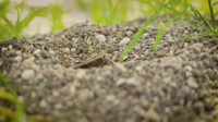 Close Up Of Anthill