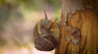 Close Up Of Snail On Tree