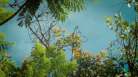 Galhos de árvores com fundo de céu azul